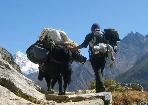 Newly Open Trekking