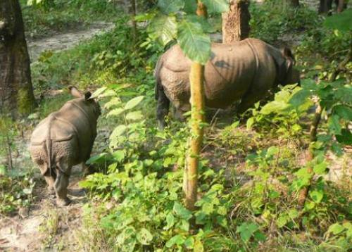 Chitwan Jungle Safari 1 night 2 Days